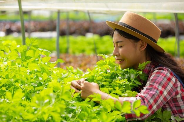 Sistema hidropónico, siembra de hortalizas y hierbas sin utilizar suelo para la salud, comida moderna y agri