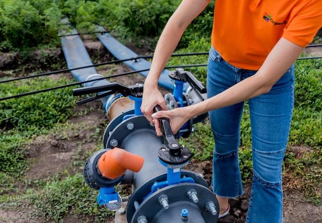 Sistema de riego por goteo. se utiliza un sistema de riego por goteo que ahorra agua en un campo de zanahorias jóvenes. el trabajador abre el grifo