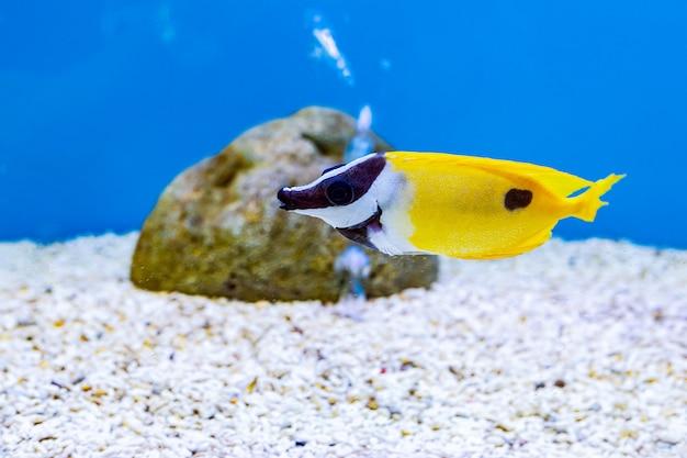 Sobre peces de mar y peces de agua dulce en acuario