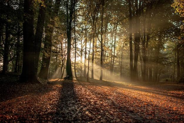 Sol brillando a través de los árboles en el bosque