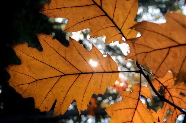 Sol brillando a través de las hojas