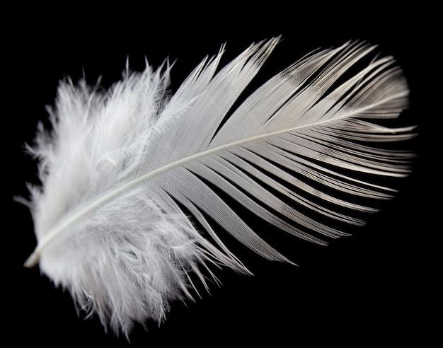 Sola pluma blanca aislada en fondo negro.