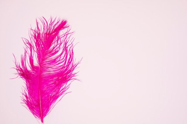 Sola pluma rosada en el fondo coloreado