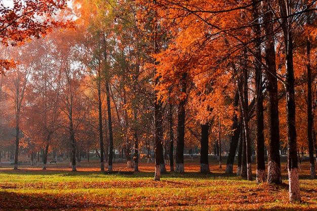 Soleado paisaje de otoño