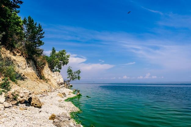 Solo árbol en la orilla rocosa en verano