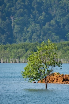 Solo árbol solo en el mar desde el sur de tailandia