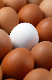 Solo huevo blanco entre huevos marrones