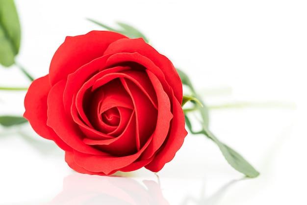 Solo rosas falsas de plástico rojo sobre blanco