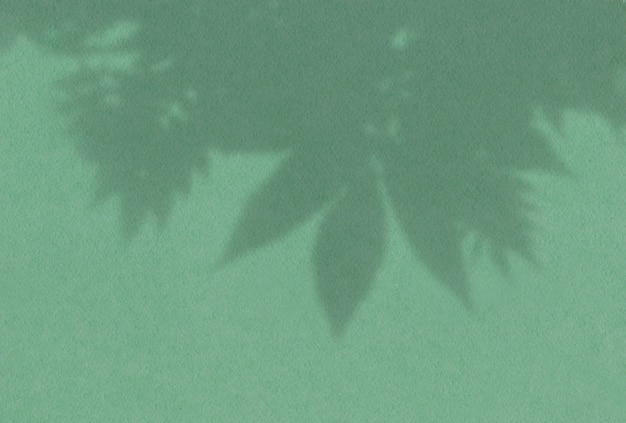 Sombra de árboles deja vista superior