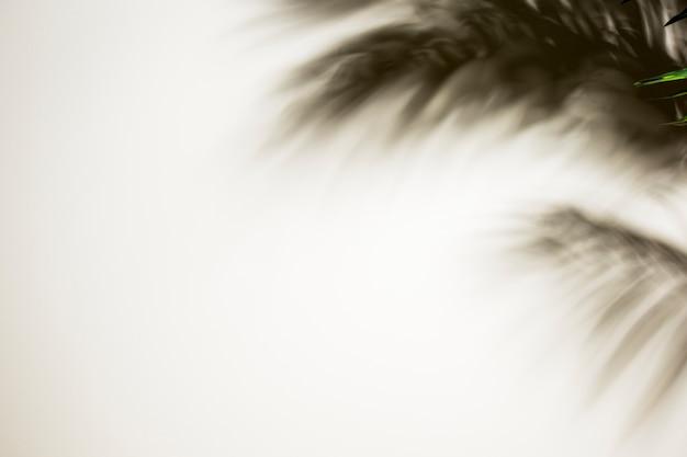 Sombra borrosa de hojas de palma sobre fondo blanco