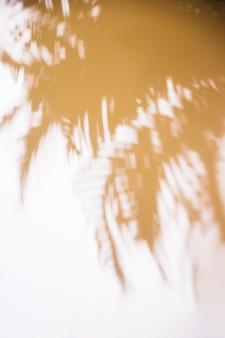 Sombra borrosa de hojas sobre fondo blanco