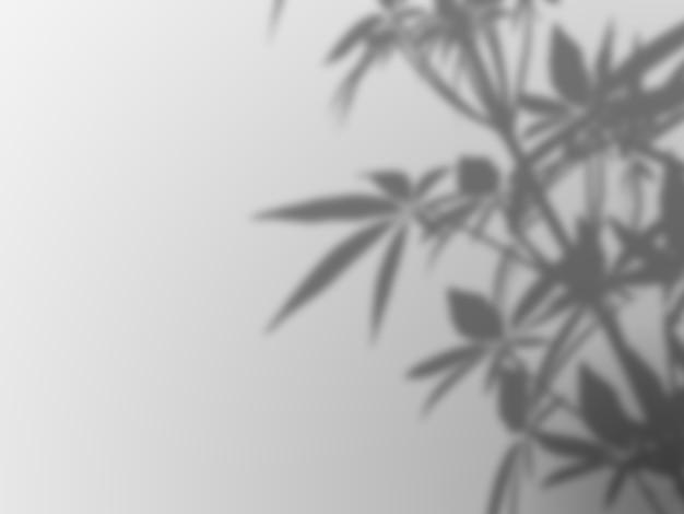 Sombra desenfocada de la planta en una pared blanca
