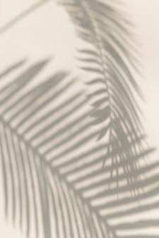 Sombra de elemento de diseño de hojas de palma.