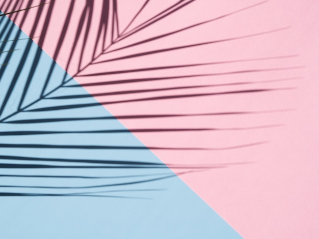 Sombra de hoja de ficus sobre un fondo azul cielo y rosa