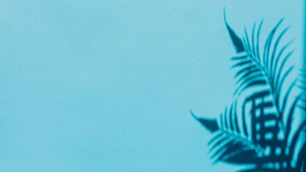 Sombra de la hoja en el fondo colorido
