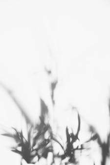 Sombra de hojas borrosas sobre fondo blanco