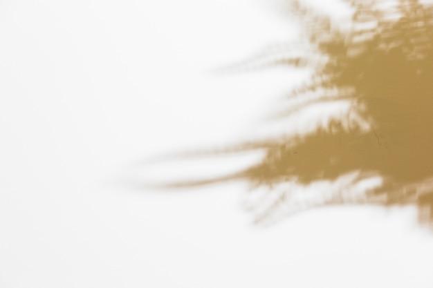Sombra de hojas de helecho borrosa sobre fondo blanco