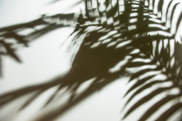 Sombra de hojas de palma natural sobre fondo blanco