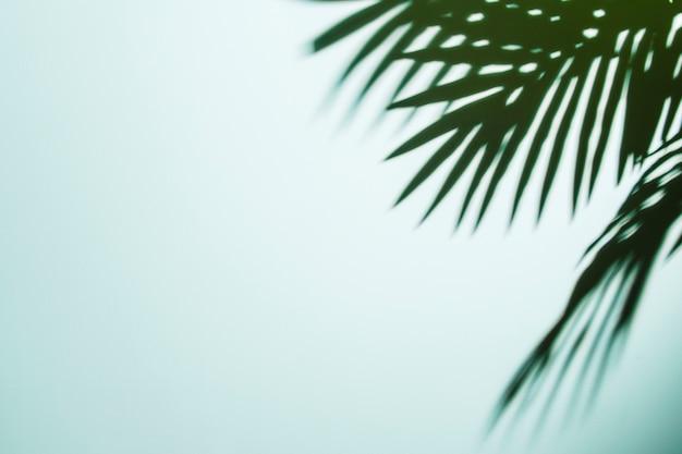 Sombra de hojas de palma sobre fondo azul