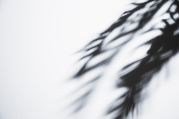 Sombra de hojas de palma temblorosa sobre fondo blanco