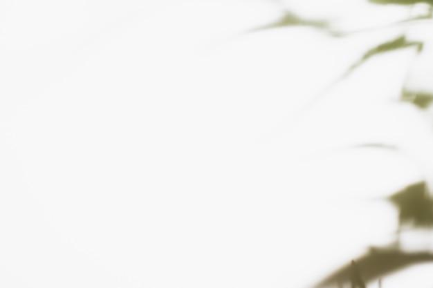 Sombra de hojas de palmera natural.