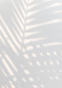Sombra de hojas de palmeras tropicales sobre una pared blanca