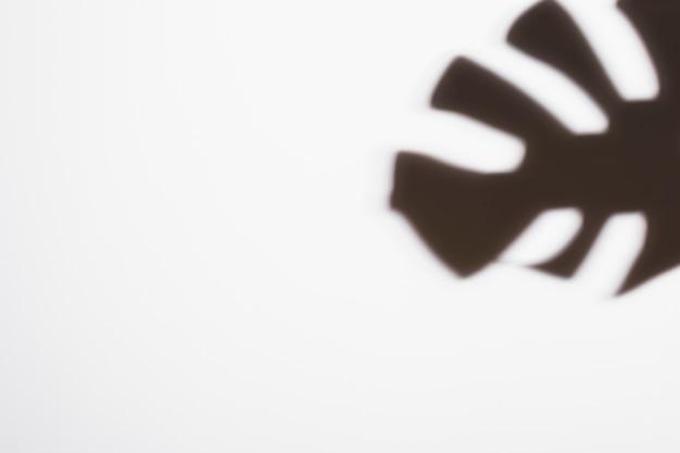 Sombra negra de la hoja de monstera tropical sobre fondo blanco