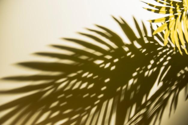 Sombra oscura de hojas verdes en la luz del sol en el fondo