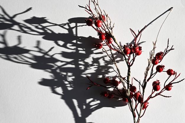 Sombra de una rama con bayas. vista superior de la larga sombra de una rama que cae.
