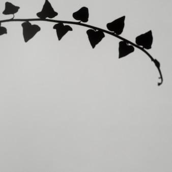 Sombra de rama de hoja sobre un fondo gris pálido