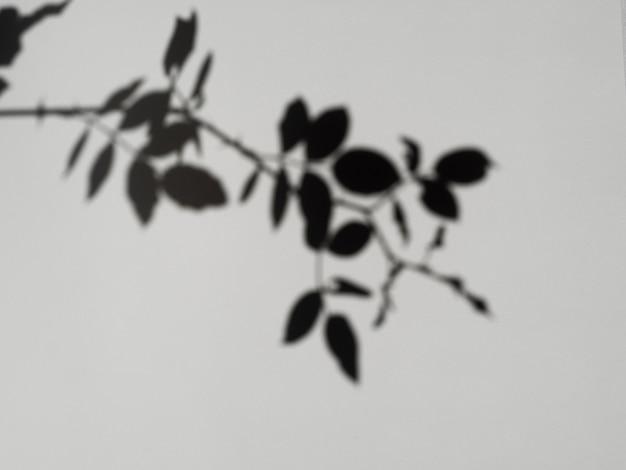 Sombra de rama de hoja sobre un fondo gris