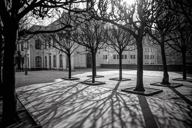 Sombras de árboles en la mañana dresden