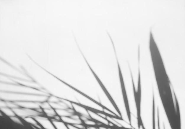 Sombras de hojas de palmera en la pared blanca