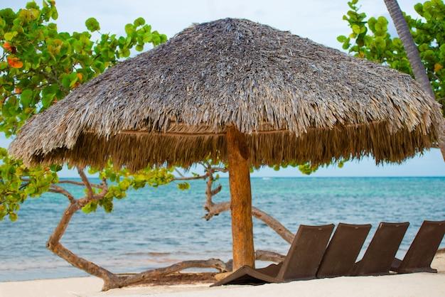 Sombrillas y camas de playa en la costa tropical