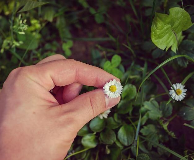 Sosteniendo la flor