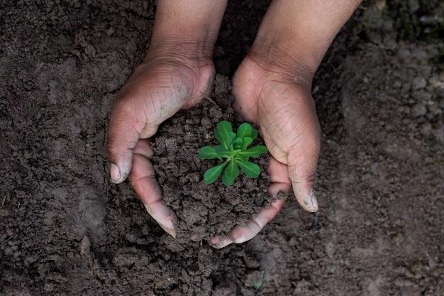 Sosteniendo la planta y el suelo