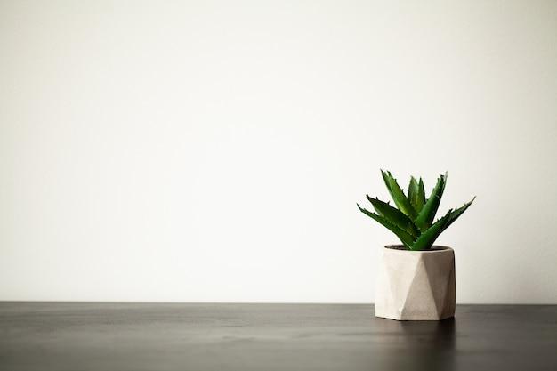 Spa. planta suculenta en la repisa de la ventana en el baño moderno