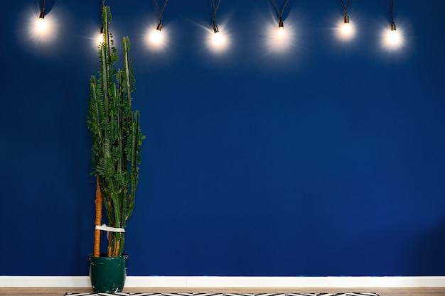 Spurge house plant contra la pared azul oscuro en una habitación