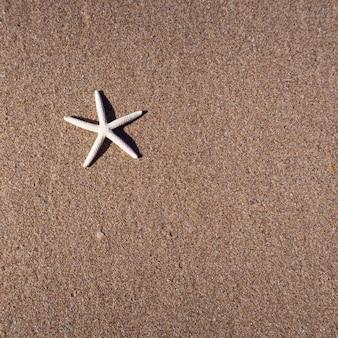 Star fi sh en la arena de la playa. vista superior.