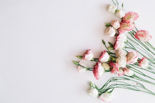 Suaves y hermosas rosas