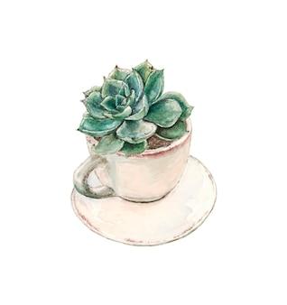 Suculenta crece en una taza de té con un plato