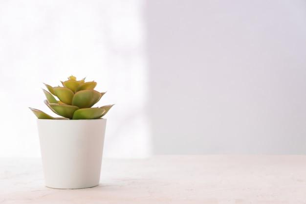 Suculenta en una pequeña olla blanca sobre la mesa. decoración del hogar, diseño de estilo nórdico. copiar espacio para texto