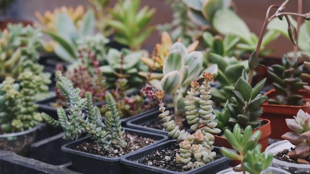 Suculentas de cactus en macetas diferentes en tienda, mercado