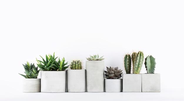 Suculentas y cactus en macetas de hormigón sobre una mesita de noche blanca