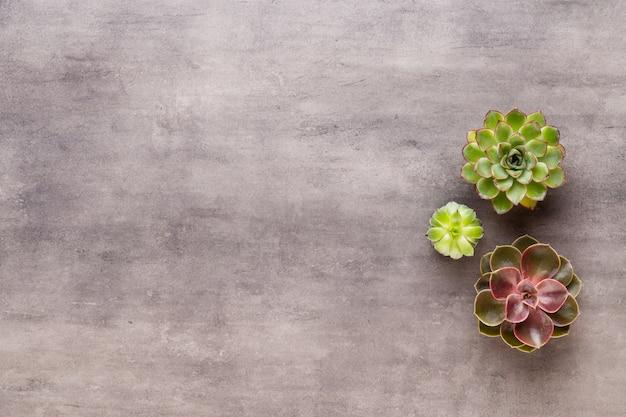 Suculentas y cactus en mesa de hormigón