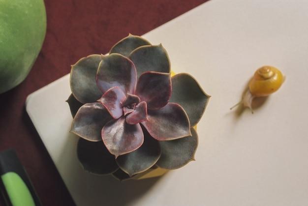 Suculentas en maceta de hormigón amarillo sobre mesa con caracol pequeño cerca de apple y notebook. macro de cerca
