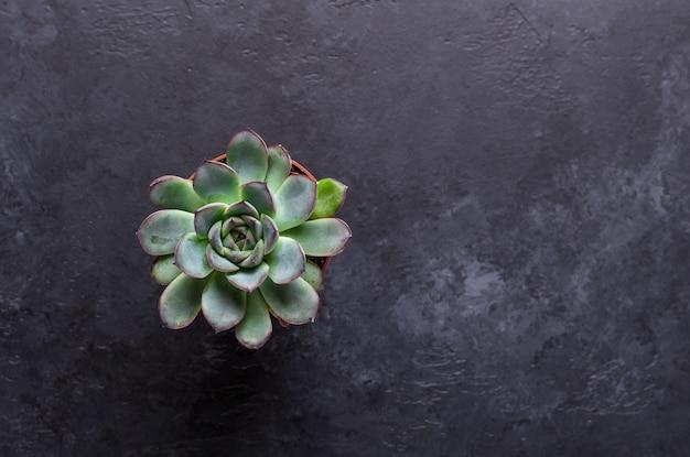 Suculentas en una mesa de piedra negra