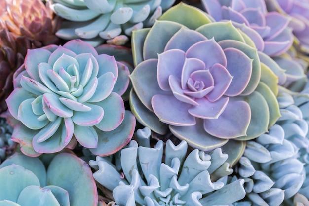 Suculentas o cactus en el jardín botánico del desierto para el diseño de la decoración y la agricultura.