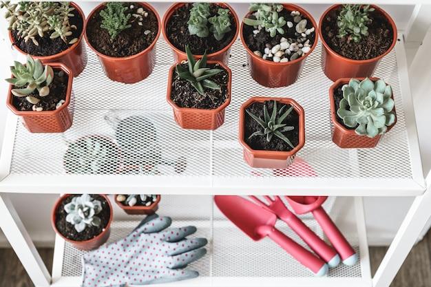 Suculentas pequeñas plantas en macetas