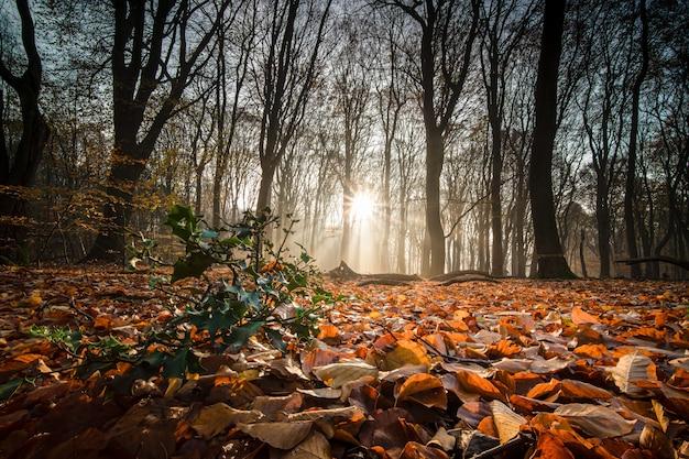 Suelo cubierto de hojas secas rodeado de árboles bajo la luz del sol en un bosque en otoño